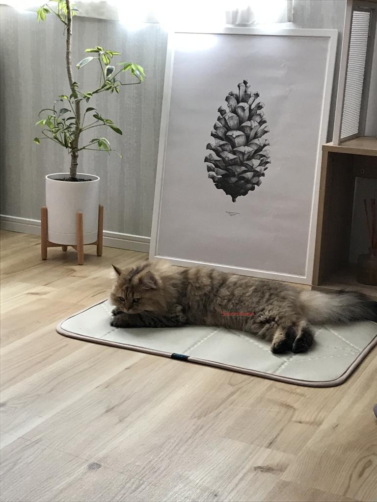 Dearペット快適マット 猫ちゃん